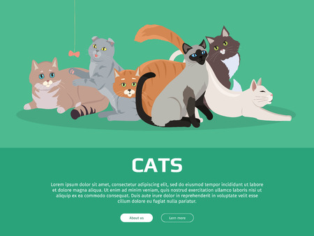 Cat breeds cute pet animal set vector web banner. Flat design. Cats in different poses sitting, standing, stretching, playing, lying. For veterinary clinic, pet shop advertising. Collection of kittens