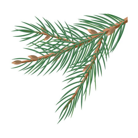winter tree: Pine tree branches with cones for christmas decorations isolated on white. Branch of Christmas tree with pine cone. Can be used for greeting card design. Winter season holidays. Vector in flat style.