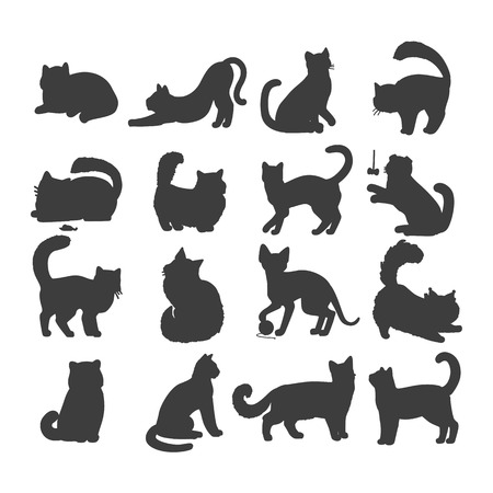 animalistic: Different breed cats. European shorthair, exotic, bengal, somali, maine coon cats heads flat vector illustrations set isolated on white background. For pet shop ad, animalistic hobby concepts
