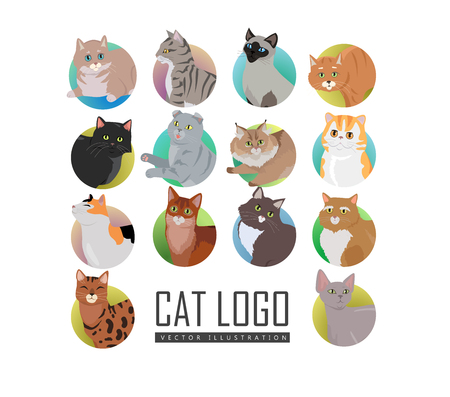 cat s: Different breed cat s faces. European shorthair, exotic, bengal, somali, maine coon cats heads flat vector illustrations set isolated on white background. For pet shop ad, animalistic hobby concepts Illustration