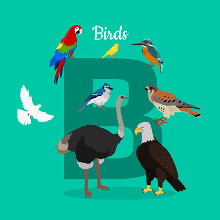 collection series: Birds with letter B isolated on green. Dove parrot eagle ostrich cockatoo hawk. Different birds kinds. Collection of aves. Part of alphabetic series with animals. ABC, alphabet. Vector in flat style.