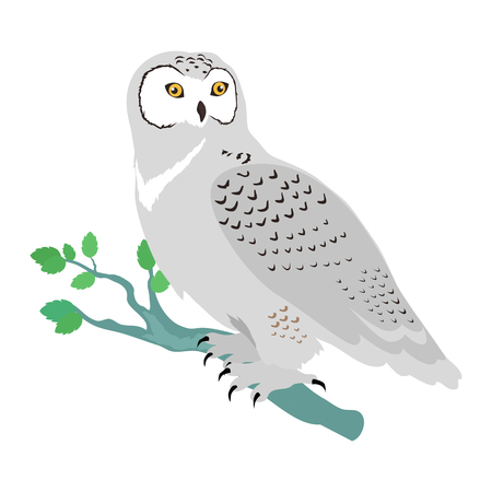Snowy owl vector. Predatory birds wildlife concept in flat style design. North fauna illustration for ,encyclopedia, childrens books illustrating. Beautiful snowy owl bird seating isolated on white.