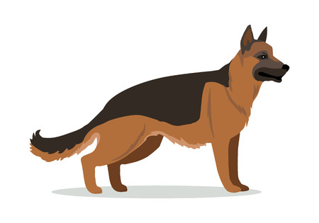 obedience: German Shepherd or Alsatian wolf dog isolated on white. Breed of medium to large-sized working dog. Strong intelligent trainable and obedience dog. Home pet. Child pattern icon. Vector illustration
