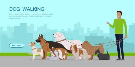 Dog walking banner. Man walks with Golden Retriever, Jack Russell Terrier, Maremma Sheepdog, German Shepherd, Pekingese, Fox Terrier breeds. Dog pet shop banner poster. Vector. Illustration