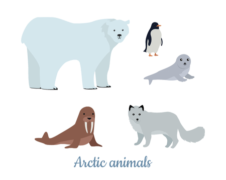 Set of Arctic Animals Illustrations in Flat Design Çizim