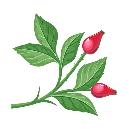 Sweetbrier Illustration in Flat Design