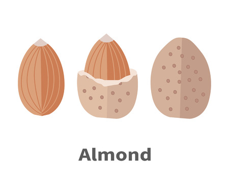 isolated ingredient: Almond nuts vector in flat design. Traditional raw, salty of fried snack. Diet product, culinary ingredient, spice, source of vitamins, elements, fatty acids and essential oils. Isolated on white.