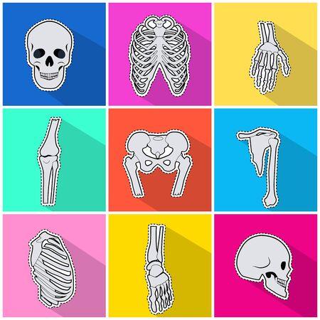 Skelet Icons. Arten von Knochen auf hellem Hintergrund