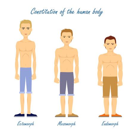Human Body. Ectomorph. Mesomorph. Endomorph. Иллюстрация
