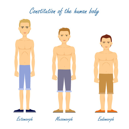 Human Body. Ectomorph. Mesomorph. Endomorph. Illustration