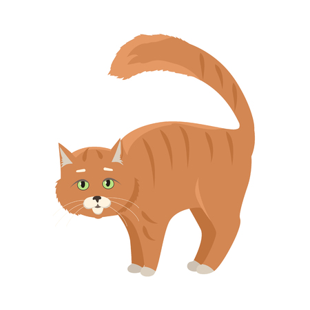 domestic cat: Aggressive or frightened red cat with arched back flat vector illustration isolated on white background. Domestic animal emotions and behavior. For pet shop ad, animalistic hobby concept, breeding