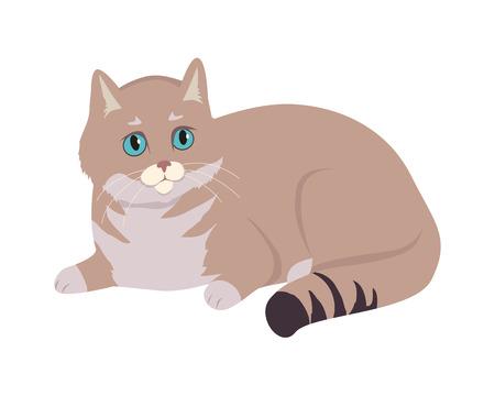 European Shorthair Cat Flat Vector Illustration
