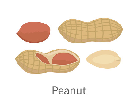 フラット スタイルのデザインでピーナッツのベクトル図  イラスト・ベクター素材