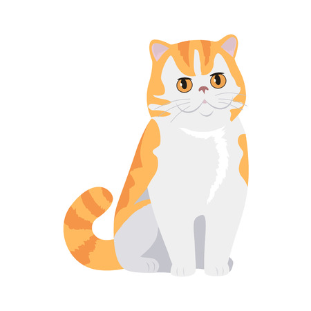 beautiful homes: Red Exotic Cat Vector Flat Design Illustration Illustration