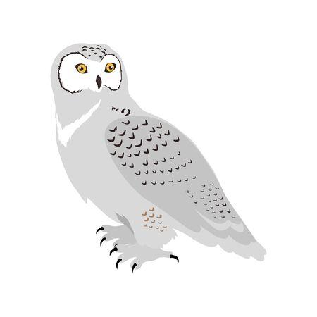 Snowy Owl Flat Design Vector Illustration