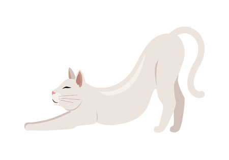 cat stretching: Burmilla Shorthair Cat Flat Vector Illustration