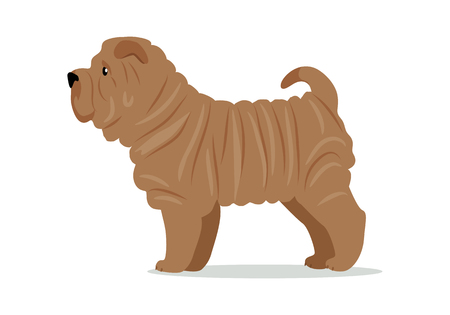 doggie: Shar Pei in Stand on White Background