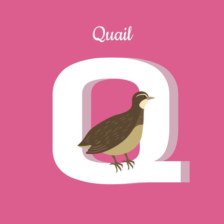 Animals Alphabet. Letter - Q Imagens - 71936051