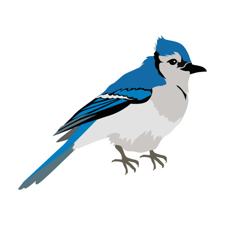 Blue Jay Flat Design Vector Illustration Иллюстрация