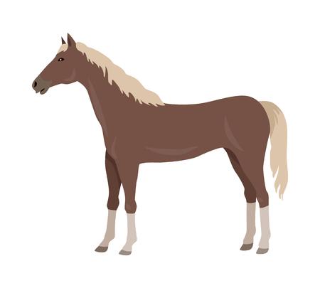 specie: Sorrel Horse Vector Illustration in Flat Design Stock Photo