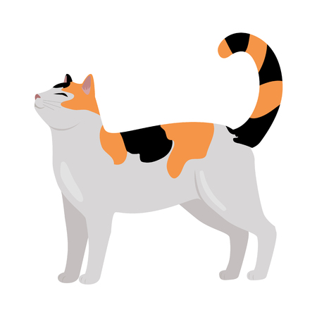 calico: Calico Cat Vector Flat Design Illustration