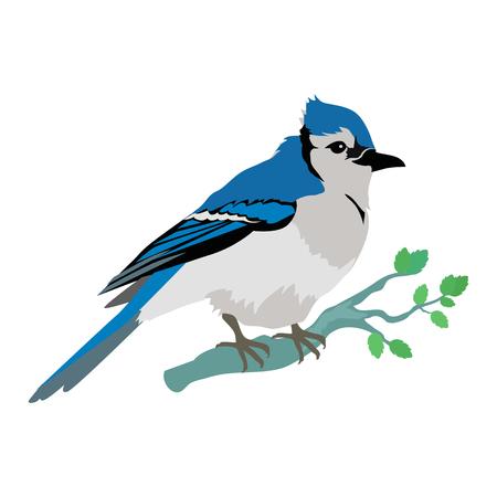 Blue Jay Flat Design Vector Illustration Illustration
