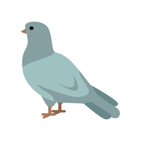 Pigeon Vector Illustration in Flat Design