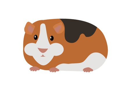 Guinea Pig Cavia Porcellus Isolated Cartoon Animal 向量圖像