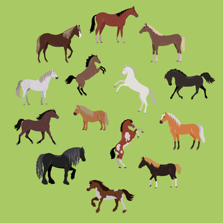 Illustration of Different Breeds of Horses 向量圖像