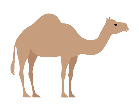 Camel isolated on white background. Even-toed ungulate within the genus Camelus, bearing distinctive fatty deposits known as humps on its back. Sticker for children. Vector design illustration Illustration