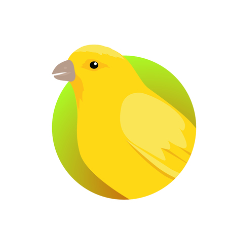 Canary Flat Design Vector Illustration Illustration