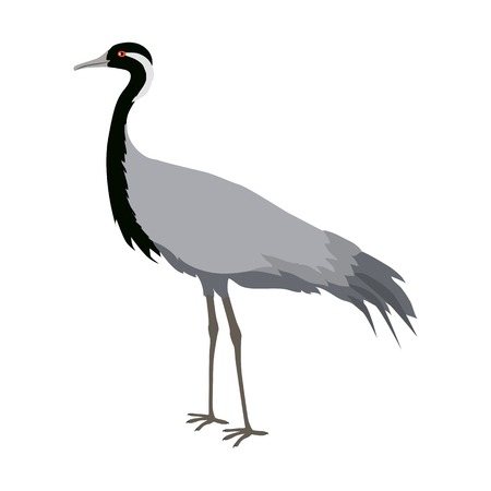 Demoiselle Crane Flat Design Vector Illustration Illustration