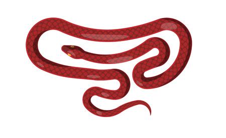 asp: Red Snake Isolated Illustration. Cartoon Reptile Illustration