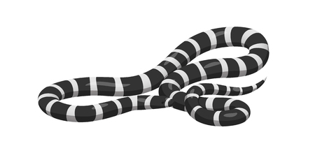Slither Banded Sea Krait Icono de serpiente Foto de archivo - 86476538