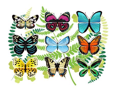 熱帯の蝶の Spescies イラスト セット
