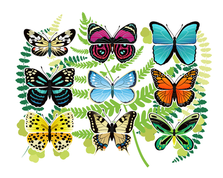 Tropical Butterflies Spescies Illustrations Set