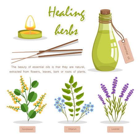 Healing Herbs in Essential Oil Promotion Poster Фото со стока - 86476596