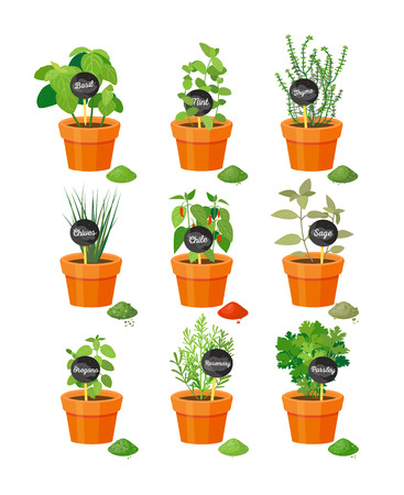 Set of Useful Herbs in Brown Pots with Labels