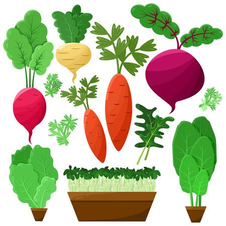 Concept wortels en salade op witte achtergrond Stock Illustratie