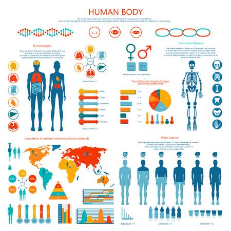 Concepto de cuerpo humano Infografía de color Foto de archivo - 86688077