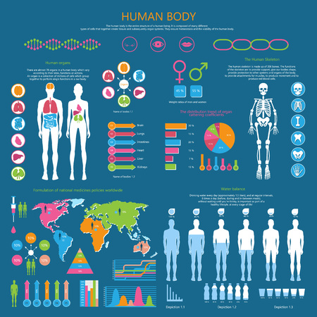 Human body infographic with organism structure, internal organs, whole skeleton, water balance and national medicine worldwide vector illustrations.