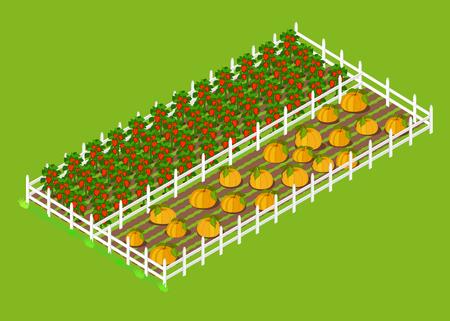 Rote Paprika und Kürbisse Betten auf dem Bauernhof gepflanzt Vektorgrafik