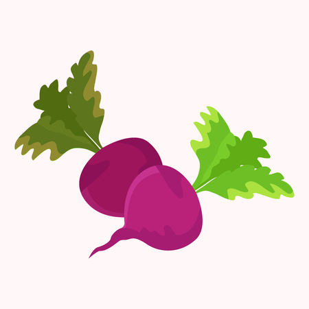 Garden Radish Purple Plant with Green Leaf Vector