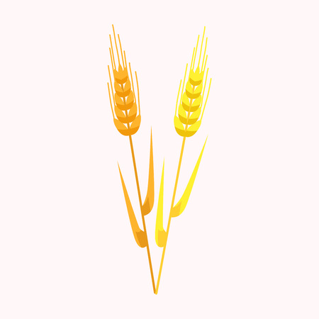 Two Yellow and Golden Ear of Wheat Isolated Vector Illustration