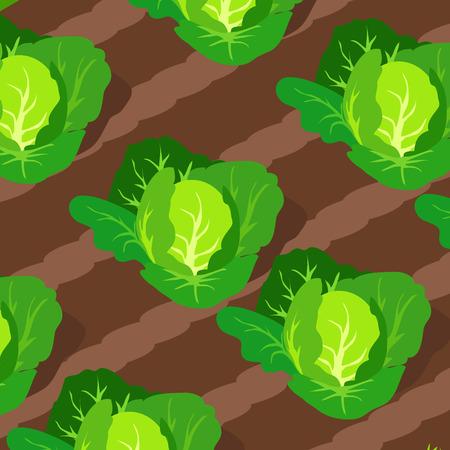 Muster mit auf Betten wachsenden Kohlköpfen