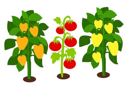 ピーマンと緑の葉でトマトの成長