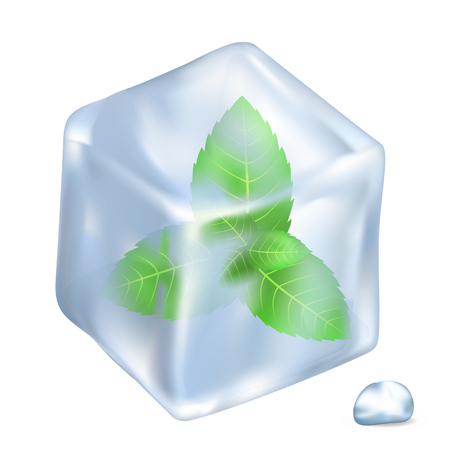 Leaves of Spermint in Ice Isolated Illustration
