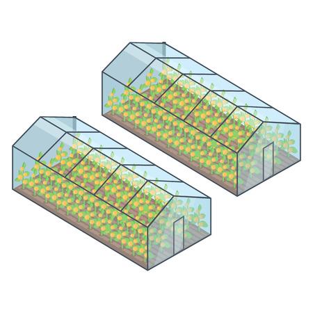 Dos invernaderos con plantas crecientes dentro del vector Foto de archivo - 88527282