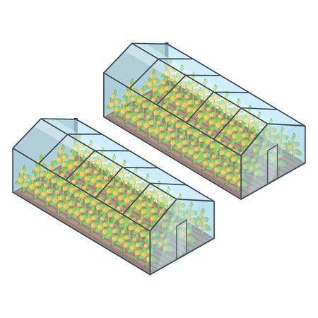 Two Greenhouses with Growing Plants Inside Vector Reklamní fotografie - 88527282