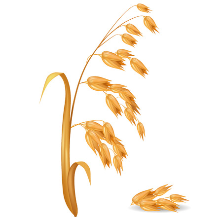 Oat Ear Plant with Pile of Grains Vector Illustration Çizim